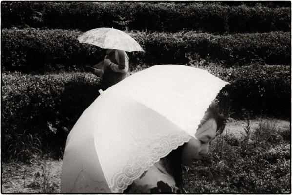 Leica M-P, 50mm Summicron.